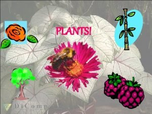 PLANTS Overview of Plants Are plants multicellular or