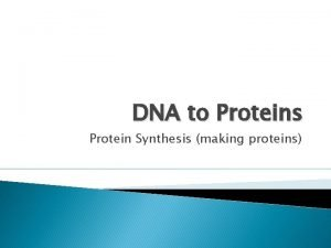 DNA to Proteins Protein Synthesis making proteins DNA