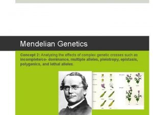 Mendelian Genetics Concept 2 Analyzing the effects of