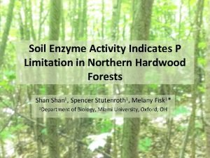 Soil Enzyme Activity Indicates P Limitation in Northern