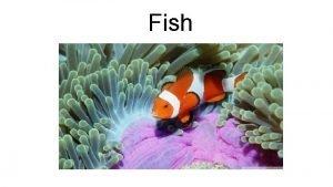 Fish Characteristics of fish Aquatic Ectothermic Gills Most