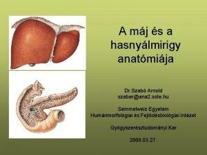 A mj s a hasnylmirigy anatmija Dr Szab