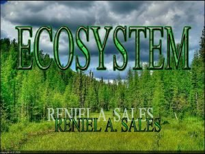 What Is An Ecosystem An ecosystem is a