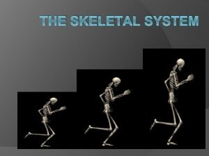 THE SKELETAL SYSTEM Functions of the Skeletal System
