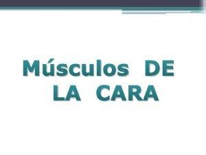 Msculos DE LA CARA MSCULOS DE LA CARA