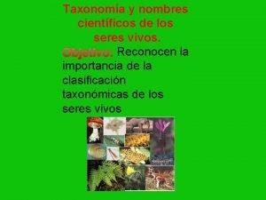 Taxonoma y nombres cientficos de los seres vivos