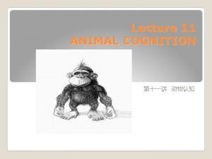 Lecture 11 ANIMAL COGNITION What is Animal Cognition