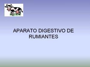 APARATO DIGESTIVO DE RUMIANTES ORGANOS DEL APARATO DIGESTIVO