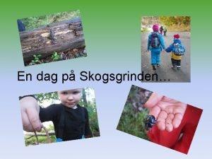 En dag p Skogsgrinden Varje dag fr barnen