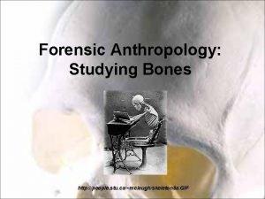 Forensic Anthropology Studying Bones http people stu camclaughskeleton