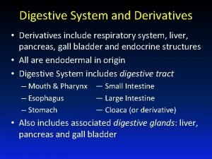 Digestive System and Derivatives Derivatives include respiratory system