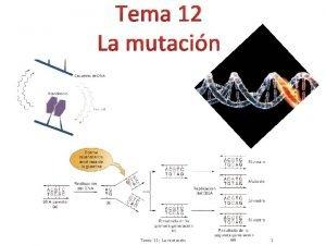 Tema 12 La mutacin Tema 11 La mutacin