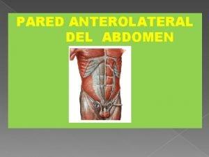 PARED ANTEROLATERAL DEL ABDOMEN OBJETIVOS Delimitar el abdomen