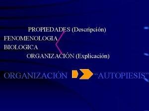 PROPIEDADES Descripcin FENOMENOLOGIA BIOLOGICA ORGANIZACIN Explicacin ORGANIZACIN AUTOPIESIS