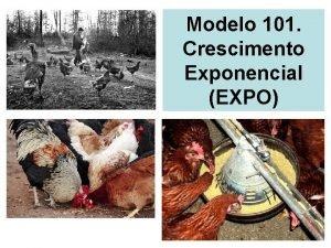 Modelo 101 Crescimento Exponencial EXPO Crescimento exponencial Uma