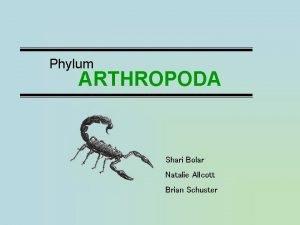 Phylum ARTHROPODA Shari Bolar Natalie Allcott Brian Schuster