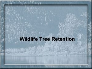 Wildlife Tree Retention 1 Wildlife tree retention One