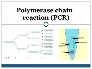 Polymerase chain reaction PCR Outline PCR Definition PCR