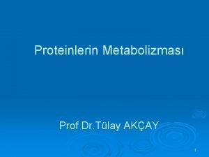 Proteinlerin Metabolizmas Prof Dr Tlay AKAY 1 Proteinlerin