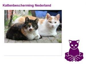 Kattenbescherming Nederland Kattenbescherming Nederland Doel Opvang en beschermen