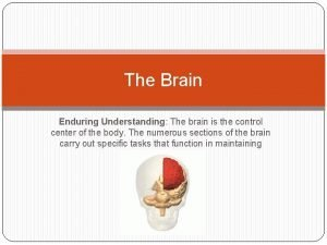 The Brain Enduring Understanding The brain is the