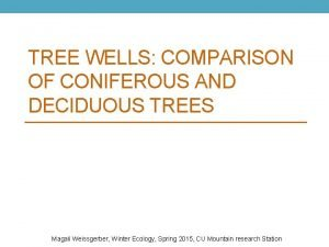 TREE WELLS COMPARISON OF CONIFEROUS AND DECIDUOUS TREES