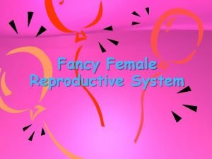 Fancy Female Reproductive System OVARIES Main female sex