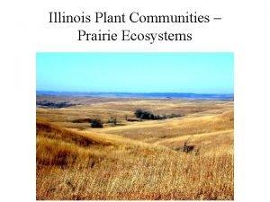 Illinois Plant Communities Prairie Ecosystems Primary Production Grasses