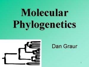 Molecular Phylogenetics Dan Graur 1 Objectives of phylogenetics