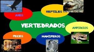 ndice Las Aves Los mamferos Los peces Los