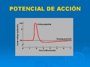 POTENCIAL DE ACCIN POTENCIAL DE ACCON CONCEPTO MECANSMO