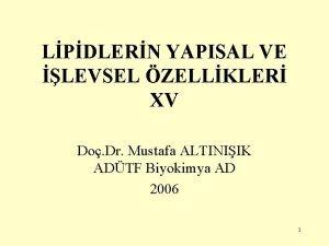 LPDLERN YAPISAL VE LEVSEL ZELLKLER XV Do Dr