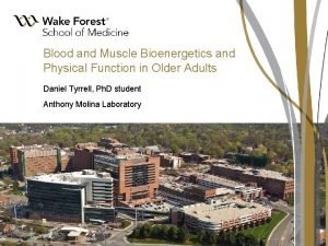 Blood and Muscle Bioenergetics and Physical Function in