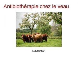 Antibiothrapie chez le veau Aude FERRAN Antibiothrapie chez