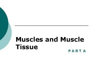 Muscles and Muscle Tissue PART A Muscle Overview