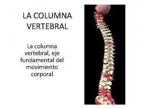 LA COLUMNA VERTEBRAL La columna vertebral eje fundamental