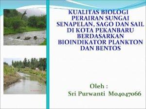 KUALITAS BIOLOGI PERAIRAN SUNGAI SENAPELAN SAGO DAN SAIL