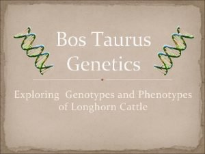 Bos Taurus Genetics Exploring Genotypes and Phenotypes of