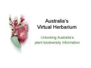 Australias Virtual Herbarium Unlocking Australias plant biodiversity Information