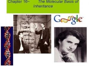 Chapter 16 The Molecular Basis of Inheritance Scientific