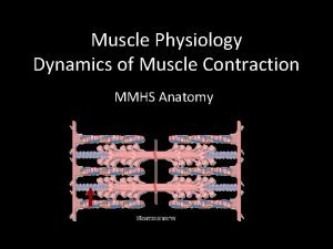 Muscle Physiology Dynamics of Muscle Contraction MMHS Anatomy