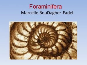 Foraminifera Marcelle Bou DagherFadel What are Foraminifera singlecelled