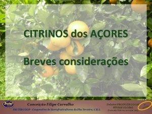 CITRINOS dos AORES Breves consideraes Conceio Filipe Carvalho