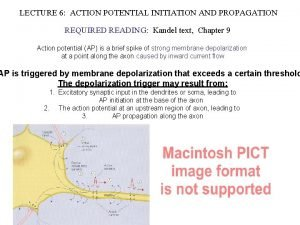 LECTURE 6 ACTION POTENTIAL INITIATION AND PROPAGATION REQUIRED