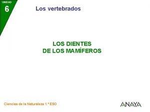 UNIDAD 6 Los vertebrados LOS DIENTES DE LOS