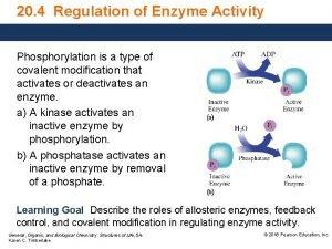 20 4 Regulation of Enzyme Activity Phosphorylation is