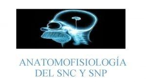 ANATOMOFISIOLOGA DEL SNC Y SNP SNC SNC ENCFALO