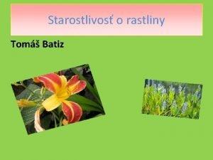 Starostlivos o rastliny Tom Batiz Sprvny vber Kad