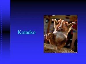 Kotako Programski dio Programski dio softvare Ogre 3