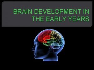 BRAIN DEVELOPMENT IN THE EARLY YEARS The Human